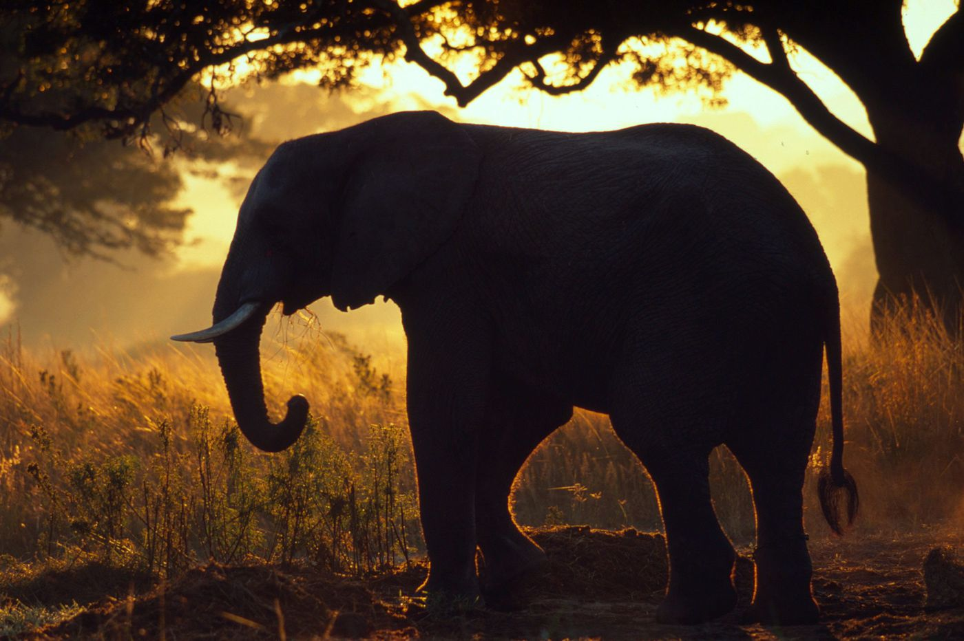 Wildlife declined by 60 percent globally in 40 years, says World Wildlife Fund