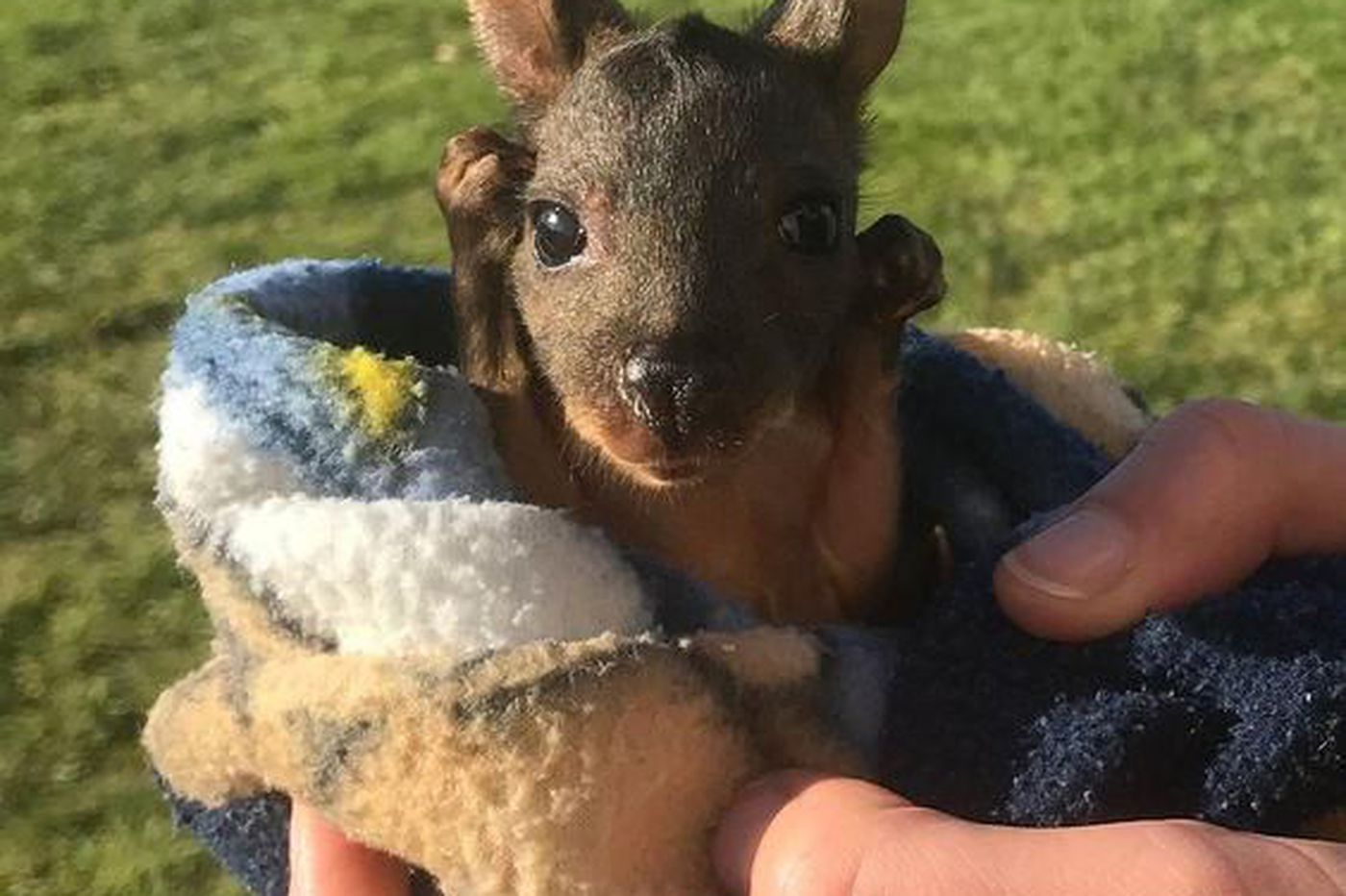 Narberth crafters made pouches for Australia's orphaned baby kangaroos and wombats