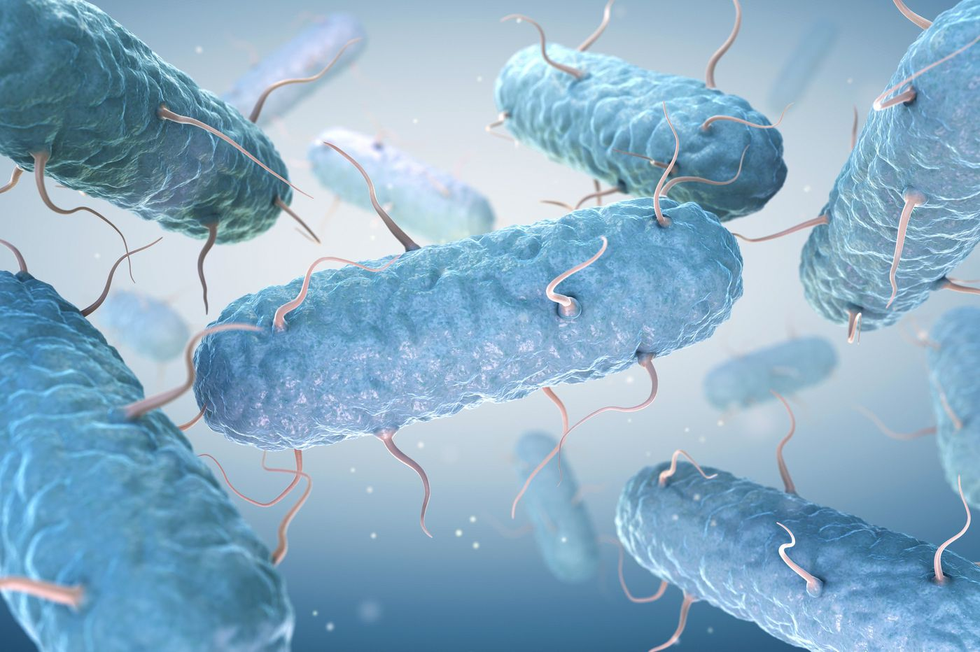 E. coli: What you need to know