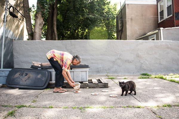 Philly has 400,000 stray cats. Here's how to deal with it.