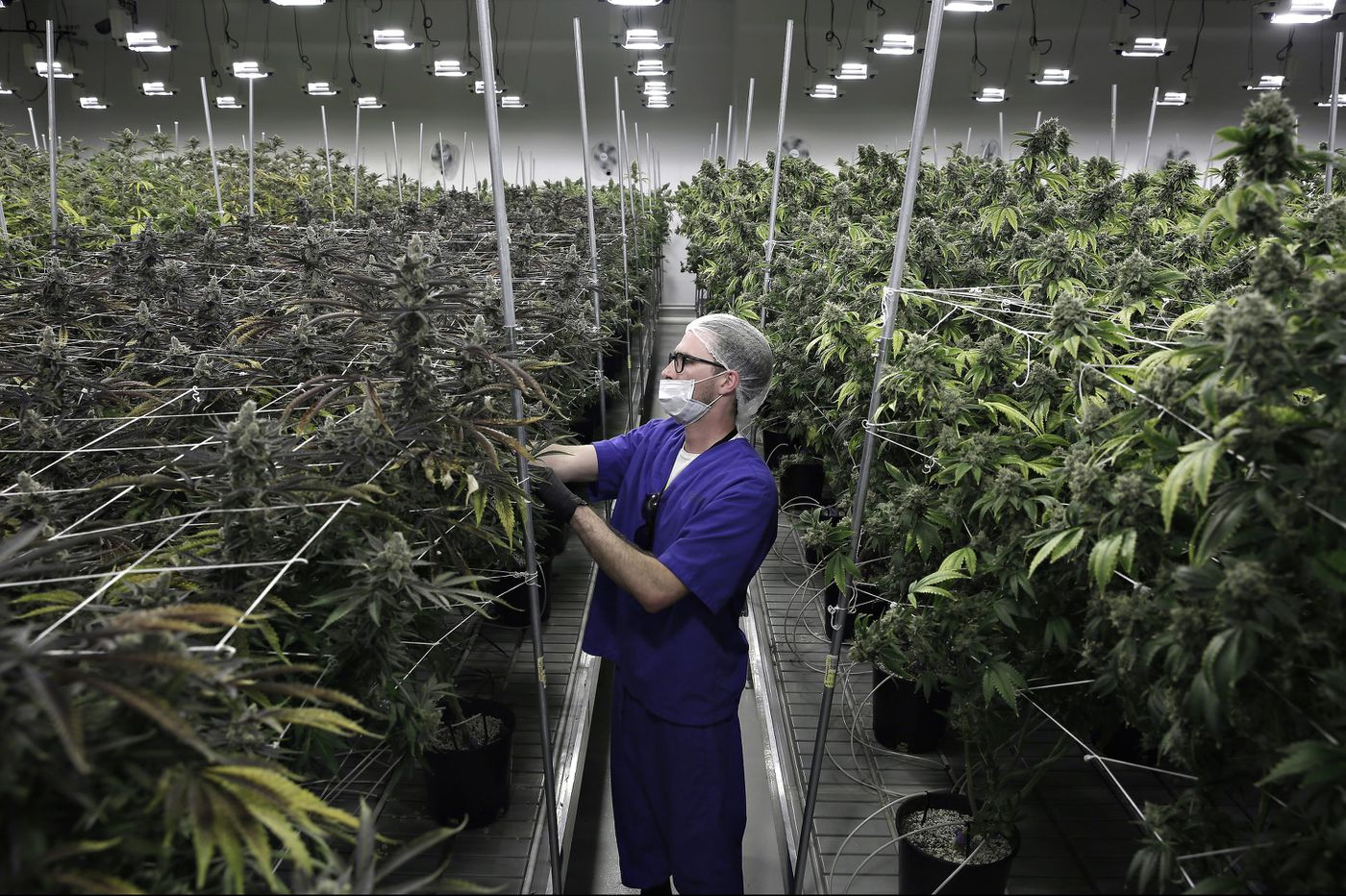 Where marijuana is on the ballot today