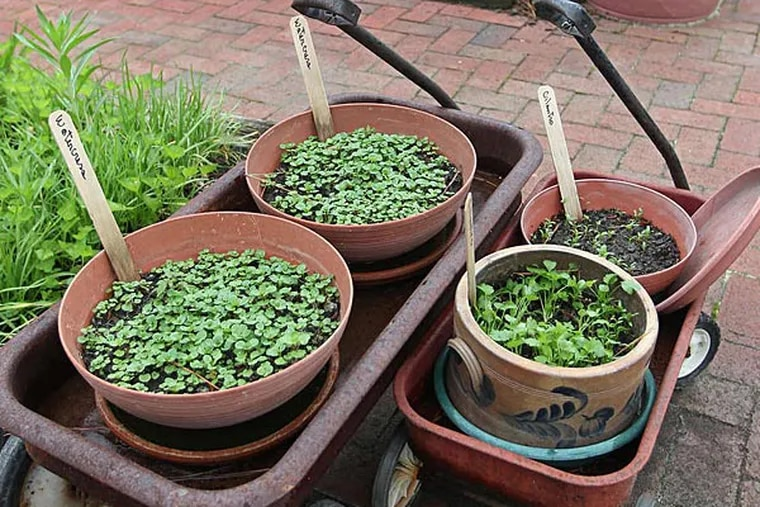 Wash down your plants before you bring them inside.