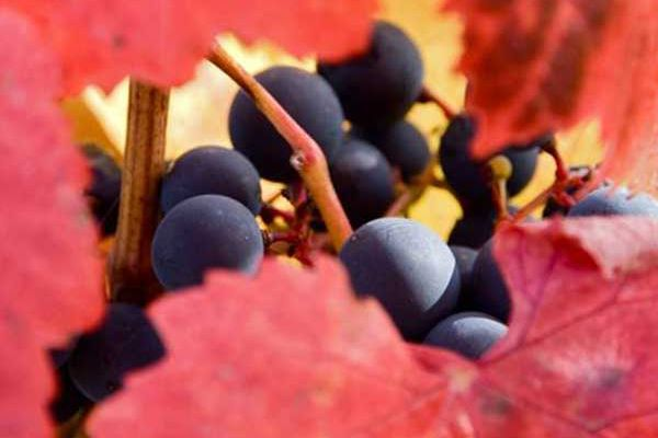 Planet of the Grapes: Intrigue of Southwest France