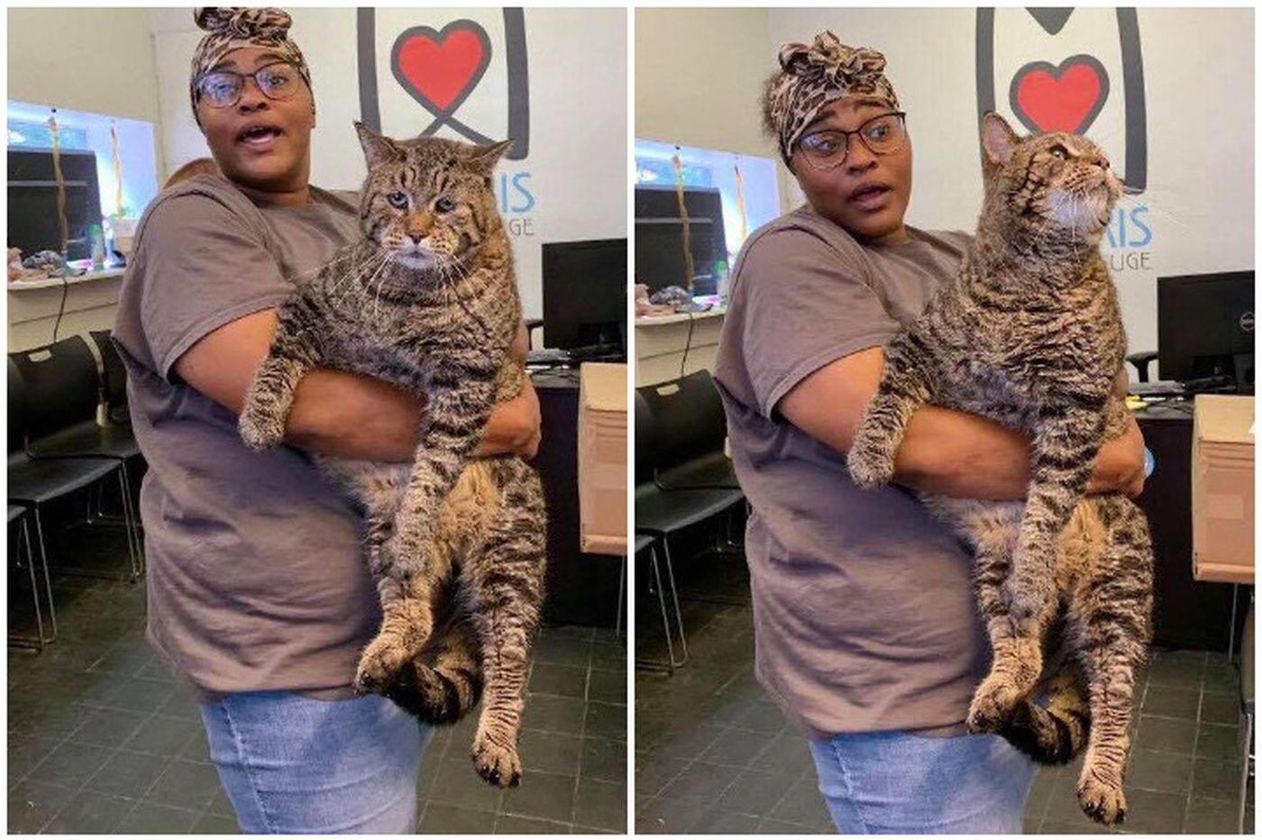 Philly's own chonky cat may soon have a forever home. Good job, internet.