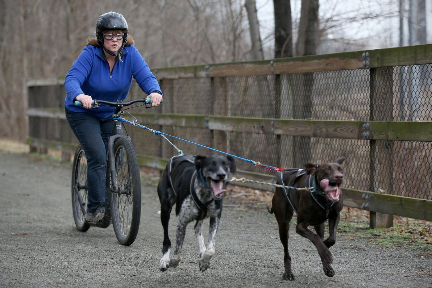 What's urban dog mushing? This Pennsylvania club will teach you