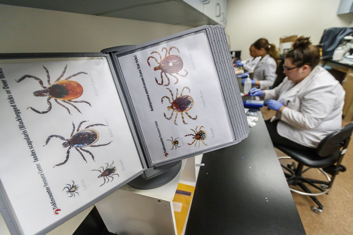 Find a tick on your body? In Pa., you can get it tested — for free.