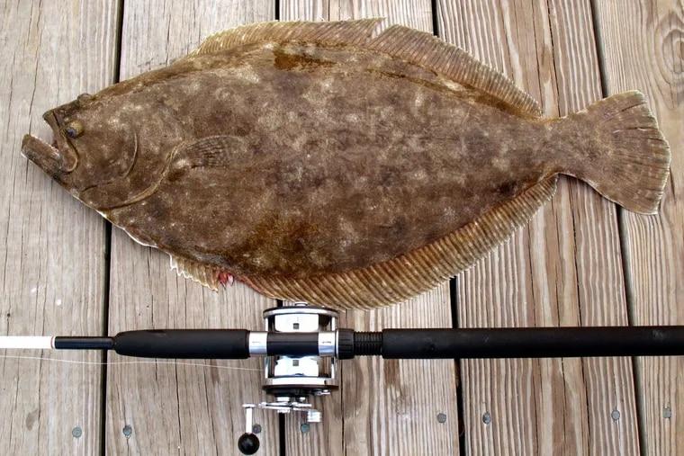 File.  Summer Flounder