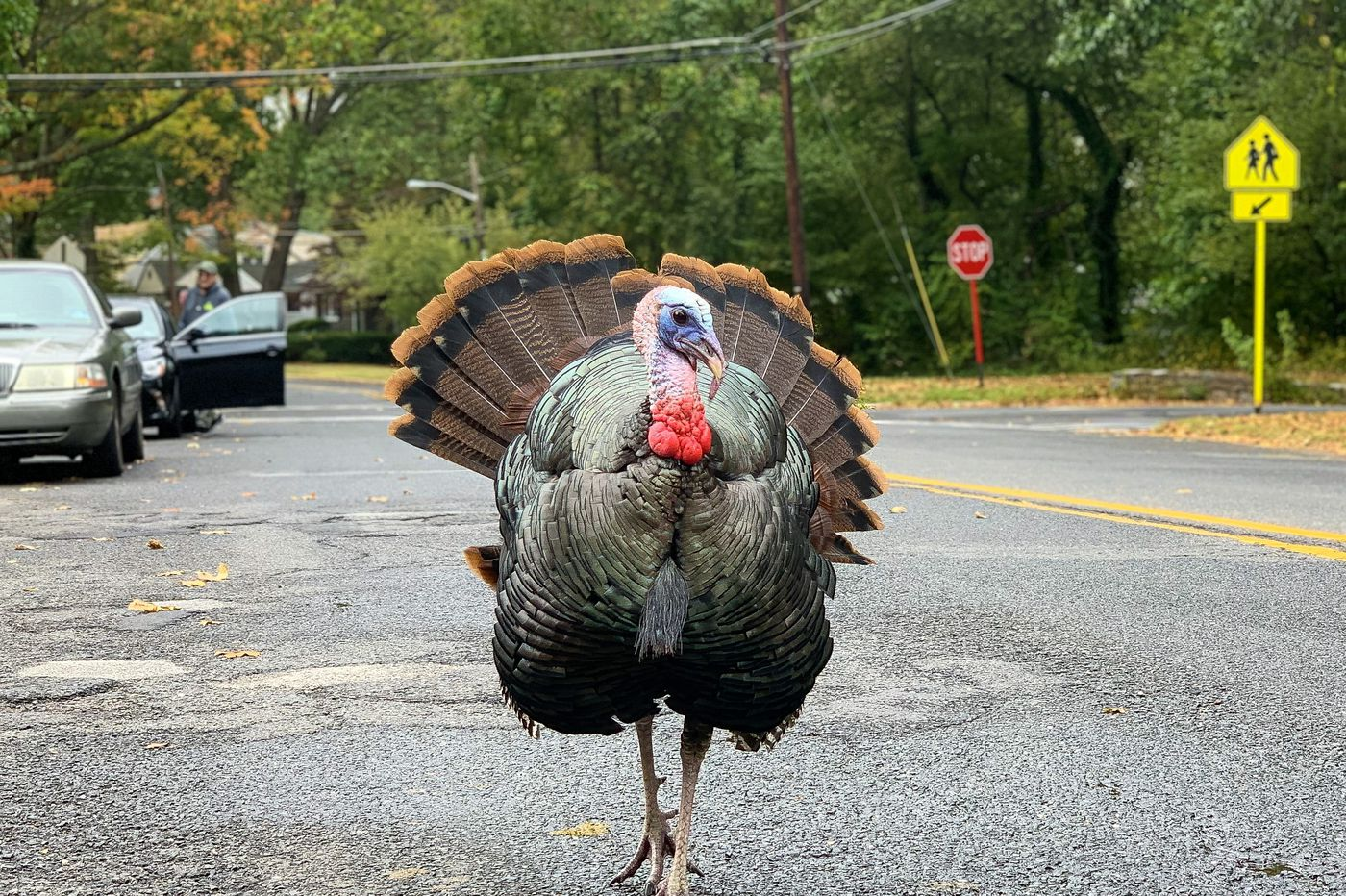 Glenny, the South Jersey celebrity turkey who united and then divided residents, has been euthanized