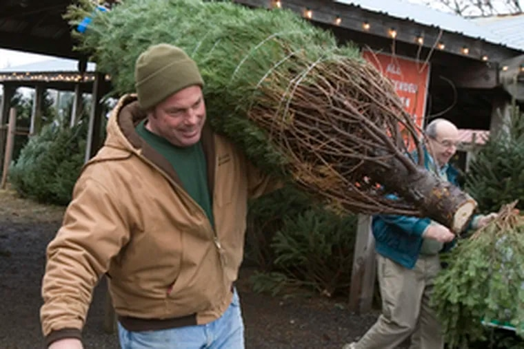 Cultivating the spirit of the holidays - and a cut of the action - Rob Varner helps Joe Kalil with his purchase at his family's Collegeville tree farm.