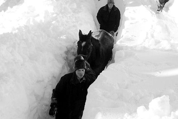 Volunteers save horses left on snowy mount