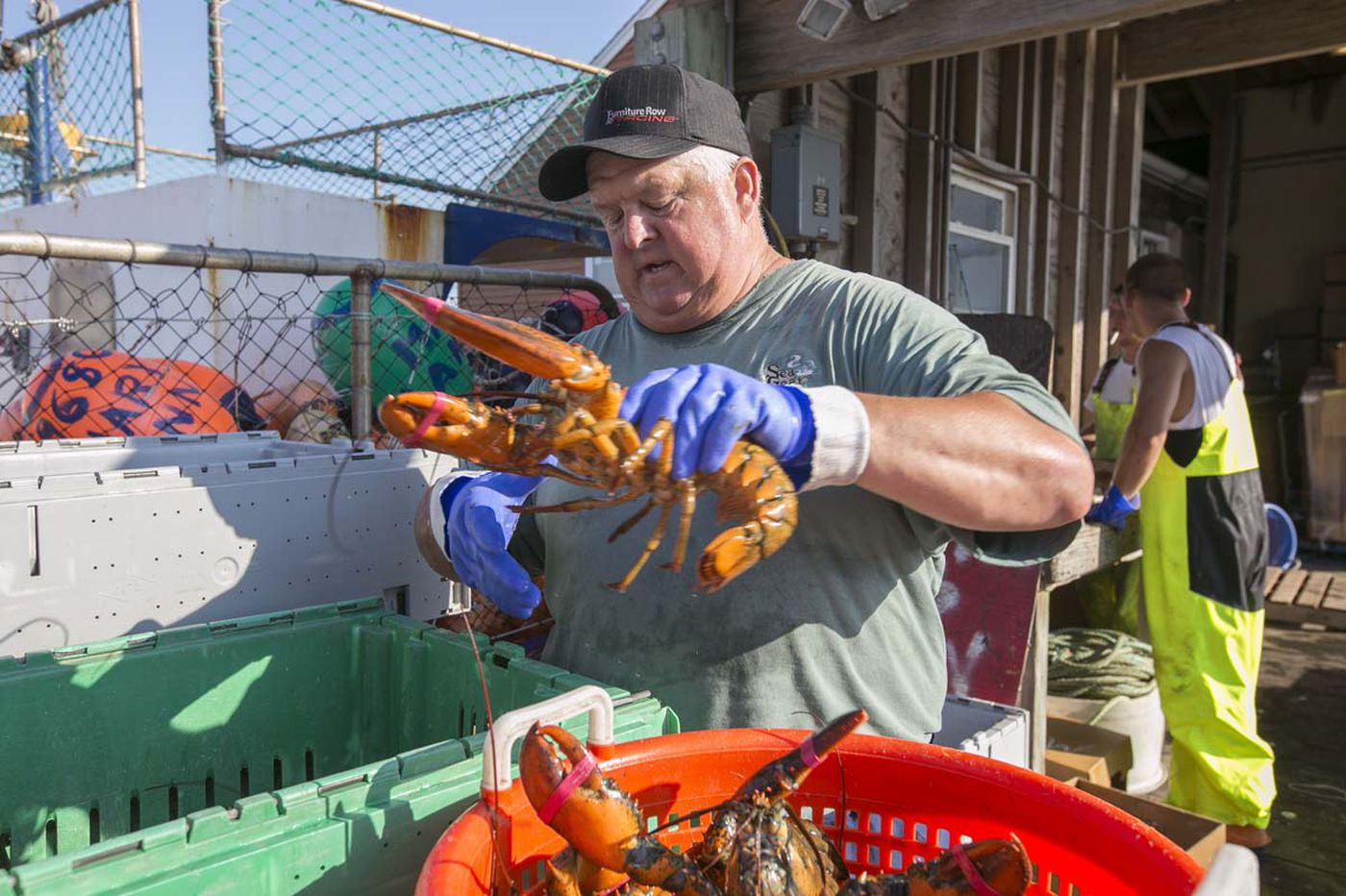 Lobster, from the Jersey coast to your dinner plate