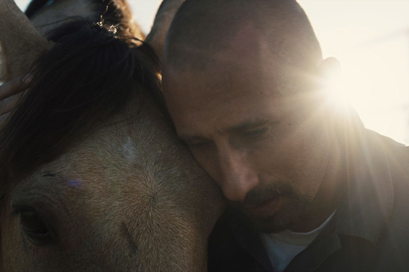 'The Mustang': It behooves you to see it