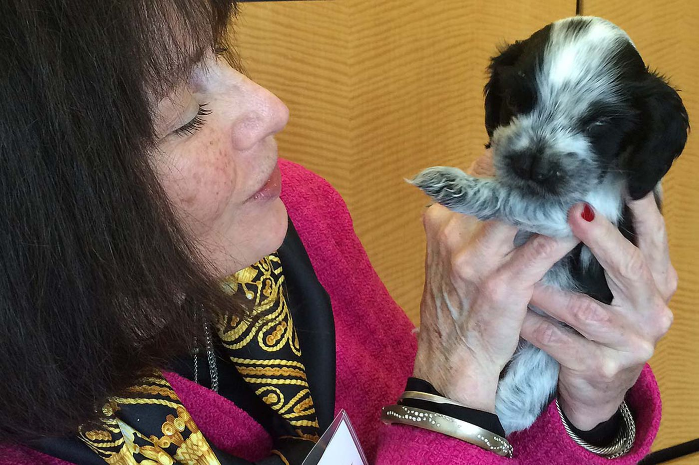 At Penn: The science of breeding a healthy dog