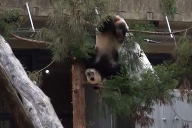 National Zoo, Smithsonian museums reopen after shutdown