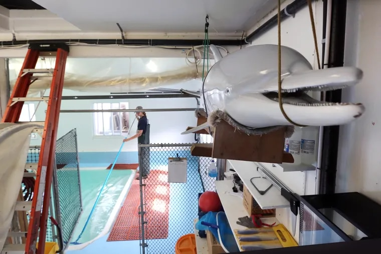 In the background of a bottlenose dolphin replica, Mackenzie Peacock, of Brigantine, a Field Stranding Technician, cleans the empty pool which is used as the final recuperation area for marine life brought to the Marine Mammal Stranding Center, in Brigantine in August.