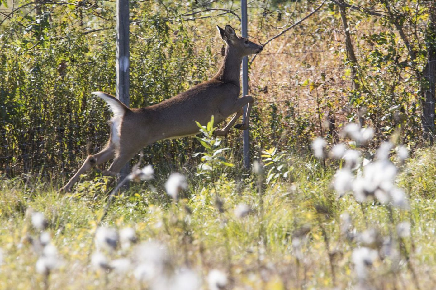 Bow hunting for deer in Philadelphia? It's a real possibility