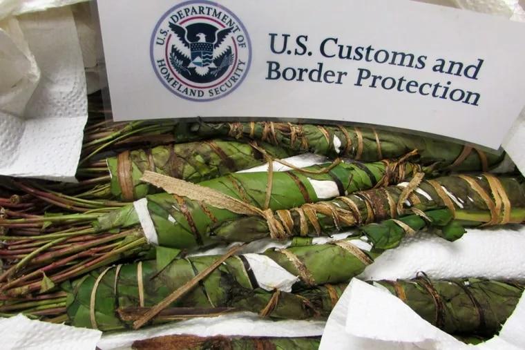 Khat seized by U.S. Customs and Border Patrol agents in Philadelphia.