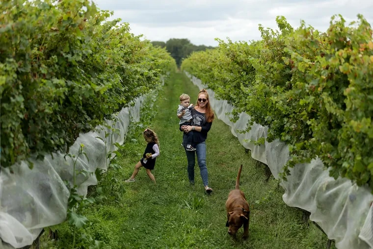 Carley Razzi Mack walks through her vineyard with her son, Miles, 2, and daughter, Olivia, 3, as Charlie their dog leads the way at Penns Woods Winery in Chadds Ford.