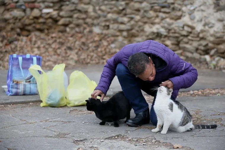Pat Frederick pets stray cats in her Germantown neighborhood. She's been taking care of dozens of stray cats, including feeding them daily, getting them spayed or neutered, and promoting adoption for about eight years, despite her own worsening health issues.
