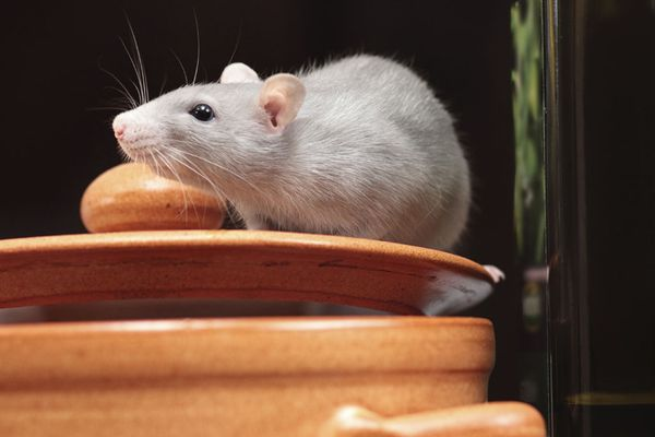 Your Place: Before winter, be sure to pest-proof your home