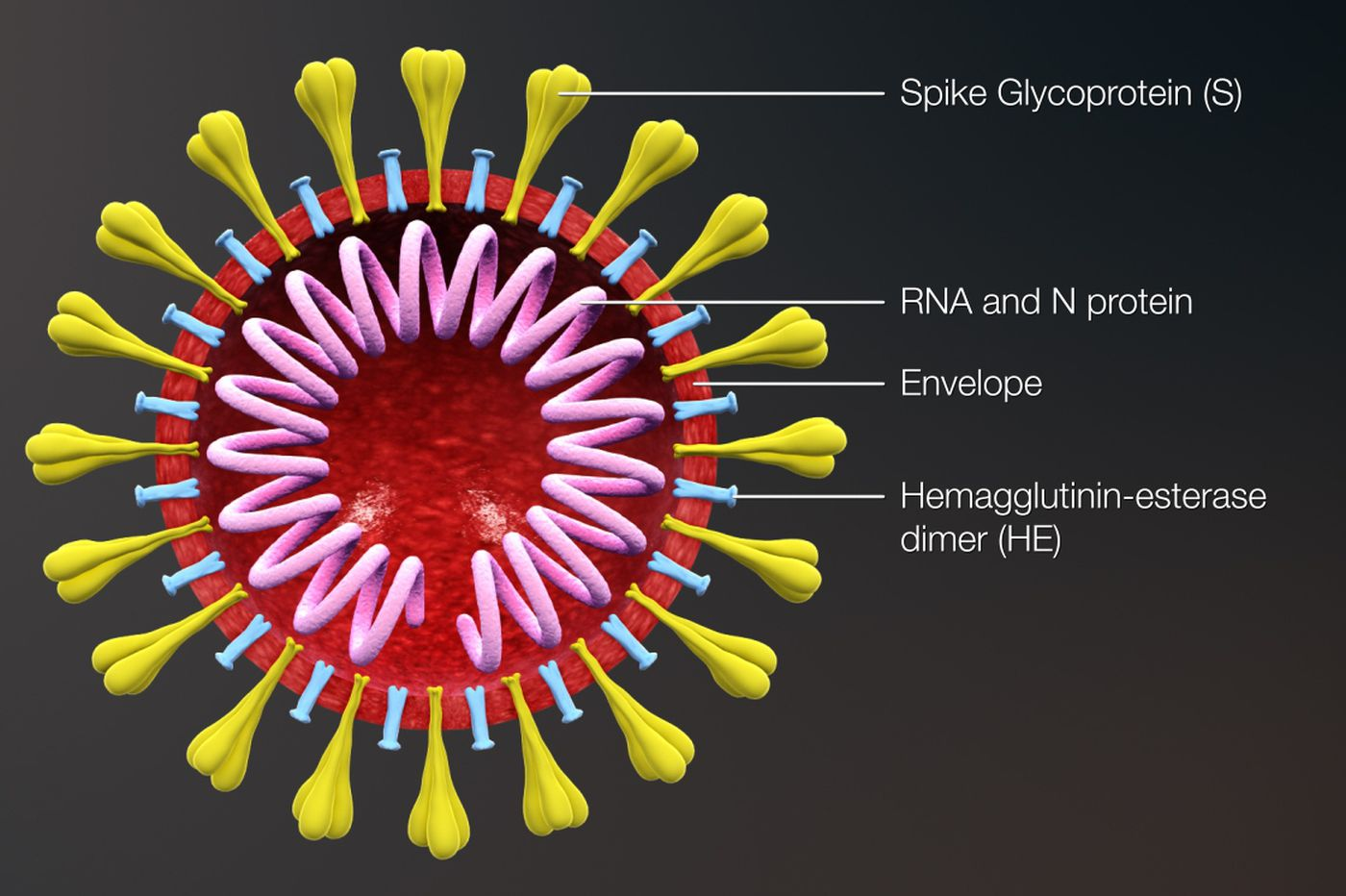 Why the coronavirus and most other viruses have no cure
