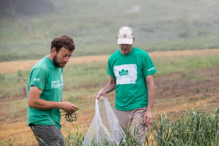 Bill Shick, left, a farmer who works for the<br/> Chester<br/> County Food Bank, works with John Landes,  a volunteer from Univest, to harvest garlic scapes on a West Chester farm for people in poverty.