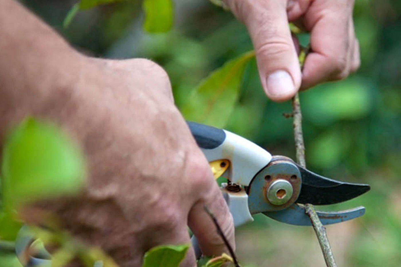 It's Time to...start chopping and pruning