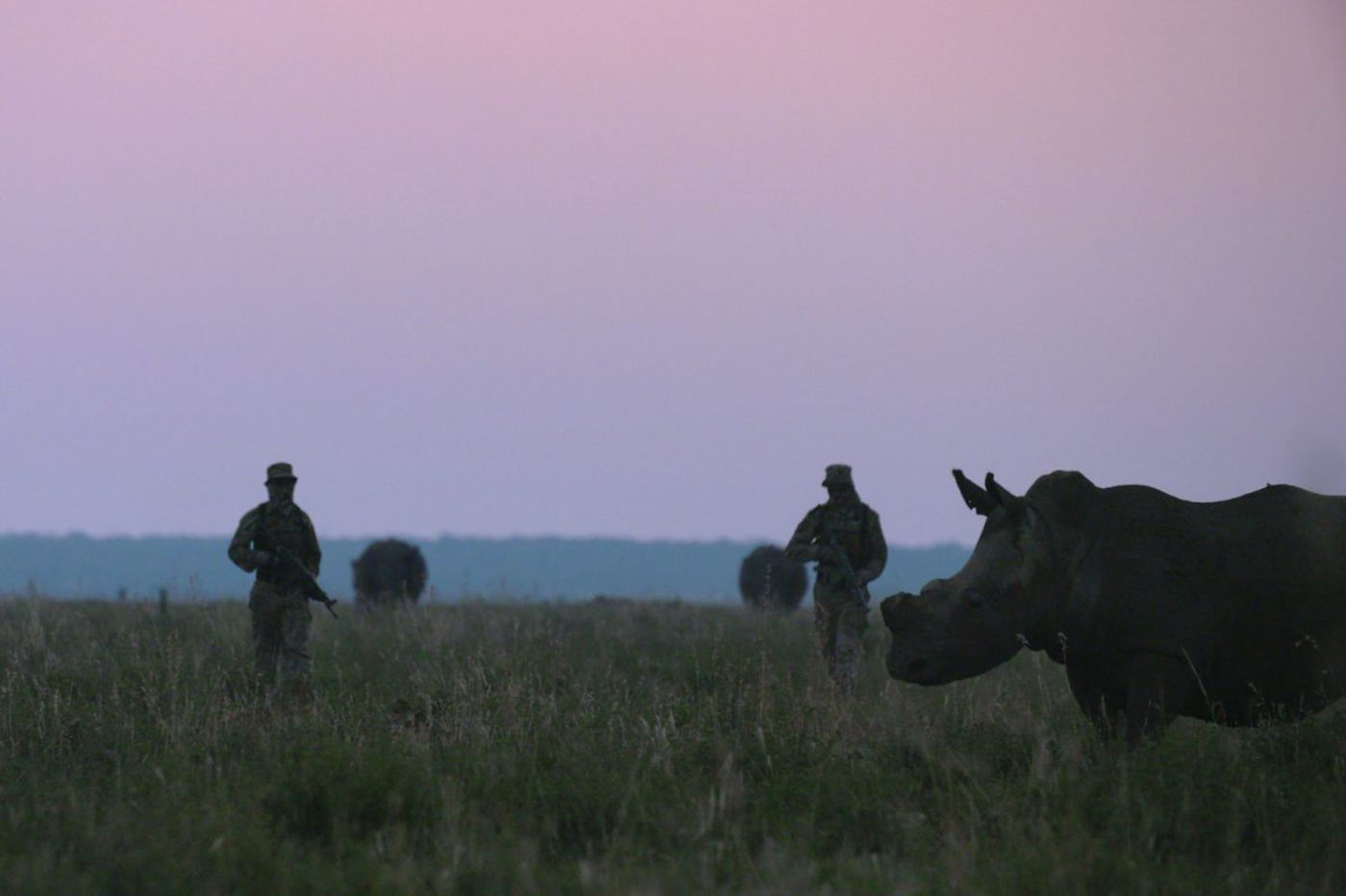 Can hunting lions and sawing off rhino horns save the species?