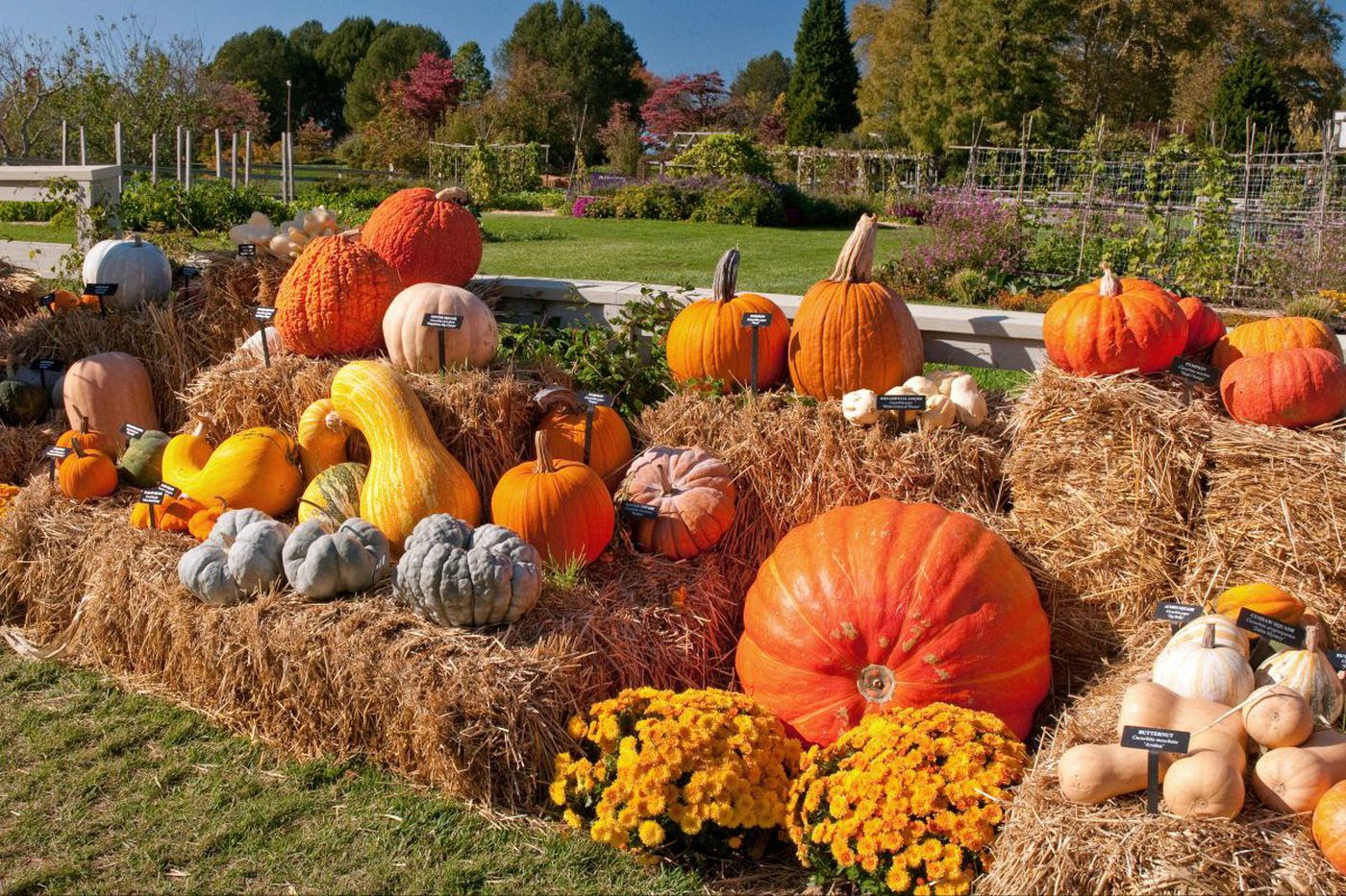 Ways to avoid pumpkins and still enjoy fall in Philly