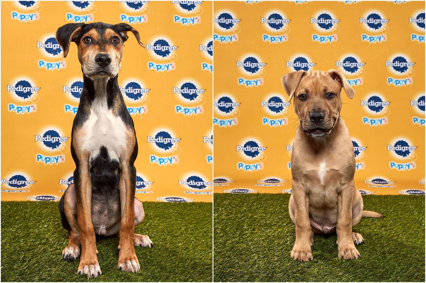These two puppies from the Philly area won this year's Puppy Bowl
