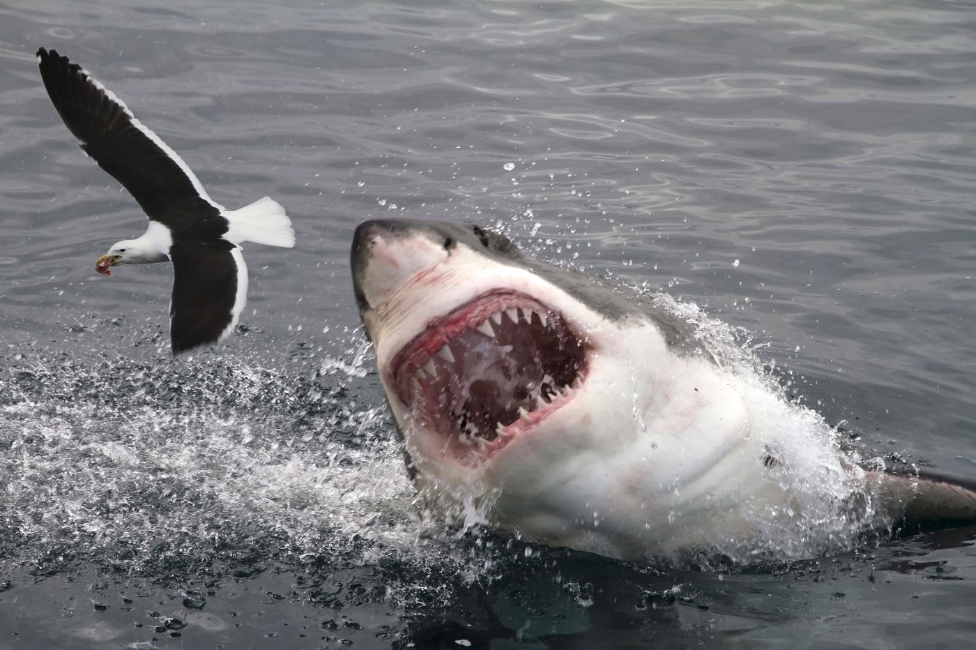 Shark sightings are up, along with ocean temperatures. Here's what to do if you encounter a shark.