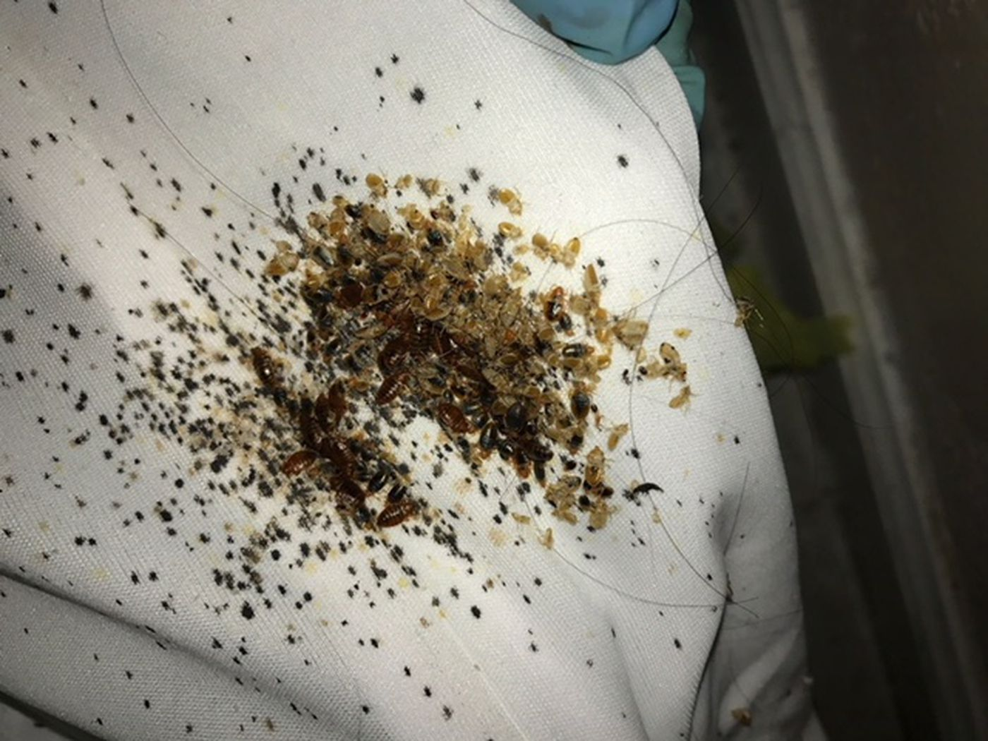 Why Philly Is A Particularly Bad Place To Get Bedbugs