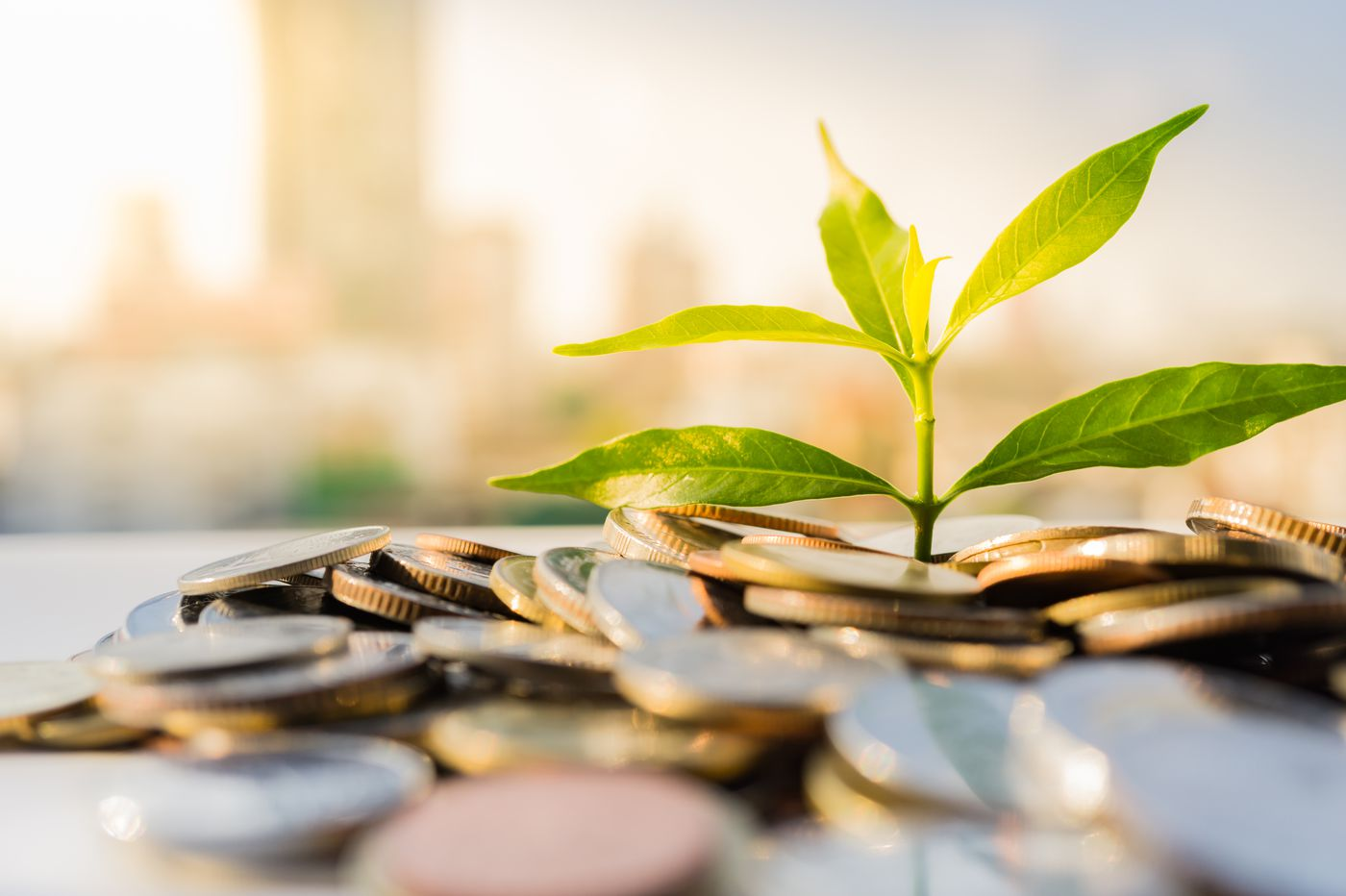 Do ESG investments outperform? One investor says 'no way'