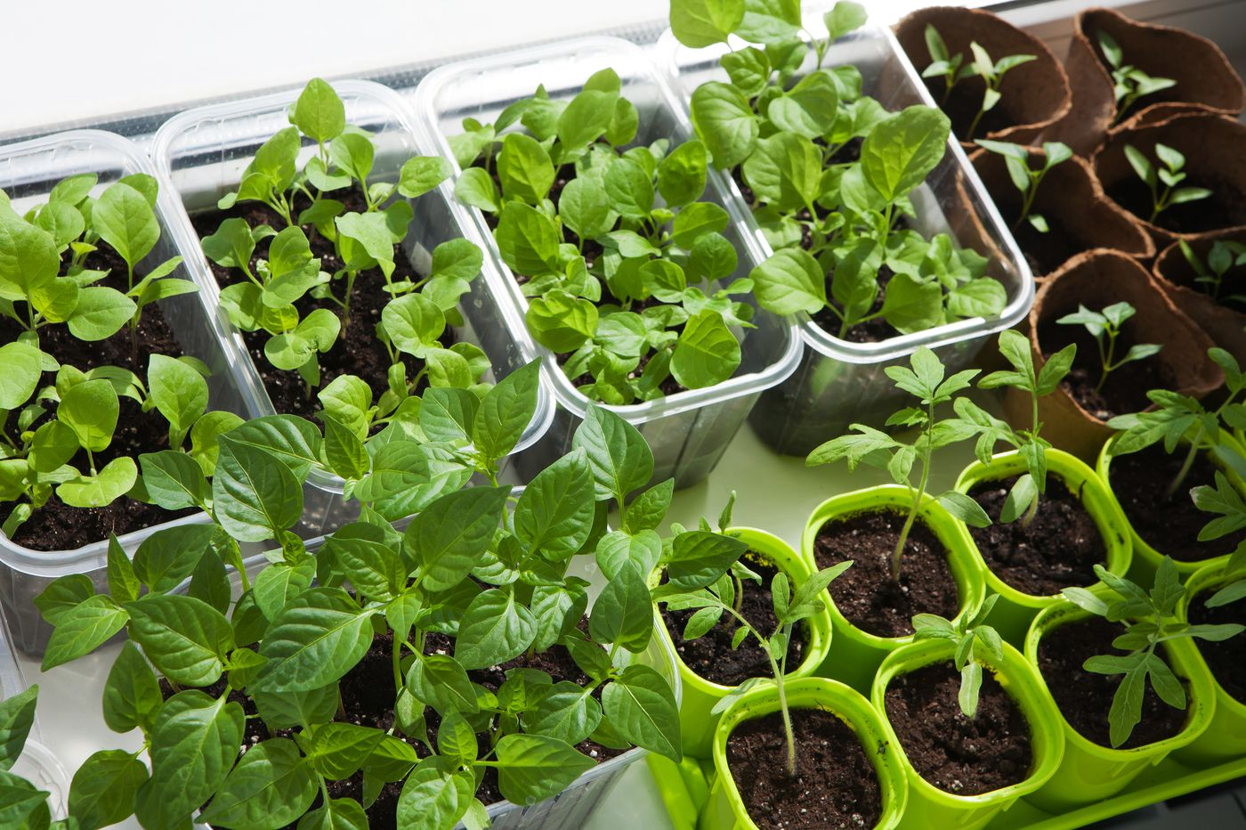What Vegetables Can You Plant Right Now Indoors And Out During