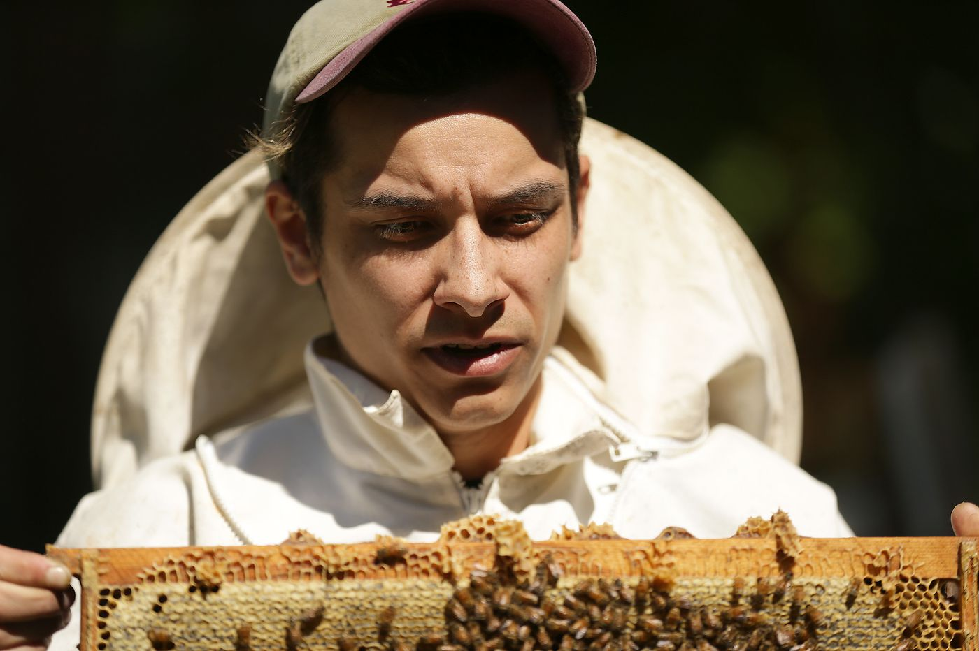 Philly millennials are buzzing about beekeeping