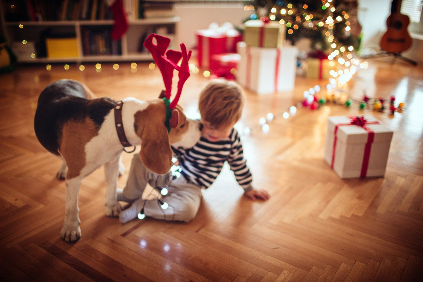 Getting the kids a puppy for Christmas? Early exposure to pet dogs may lessen risk of schizophrenia, study finds