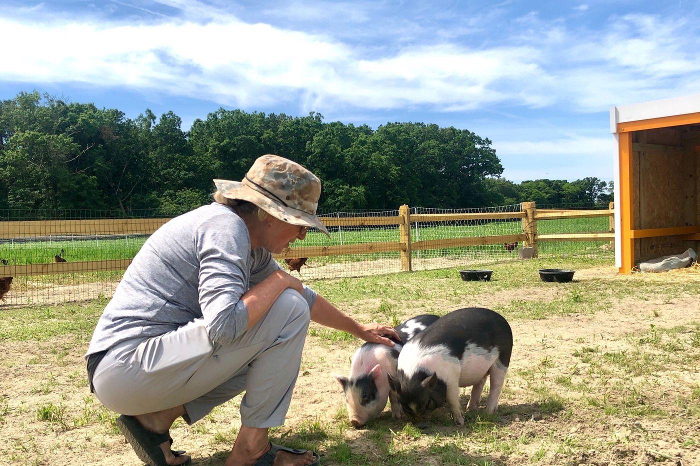 Jersey Shore restaurateur Cookie Till launches a farm and animal sanctuary