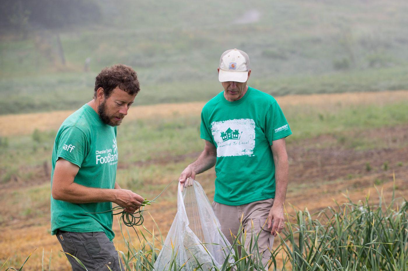 In Chesco, volunteer farmers grow food for neighbors in need