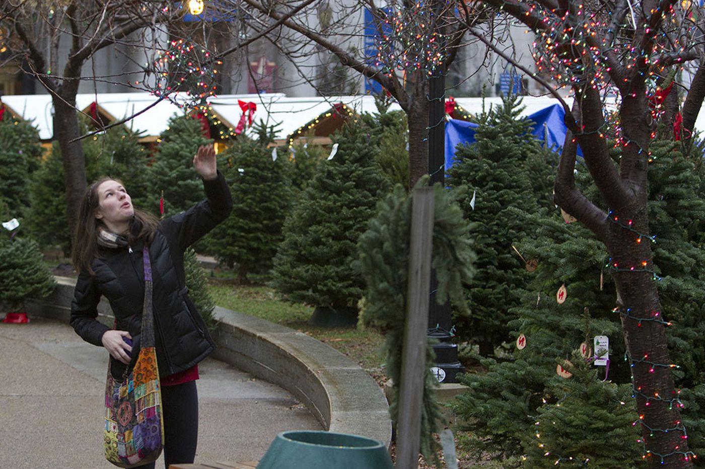 Skirting Phila.'s sapling statute: A holiday tree tradition