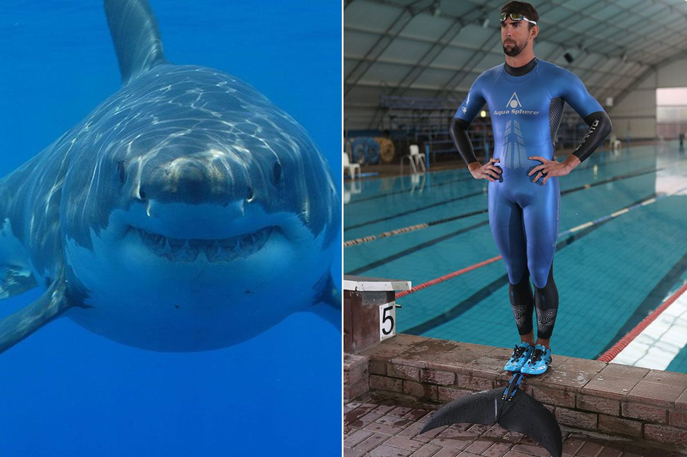 Michael Phelps' race with a great white in Shark Week: Does he stand a chance?