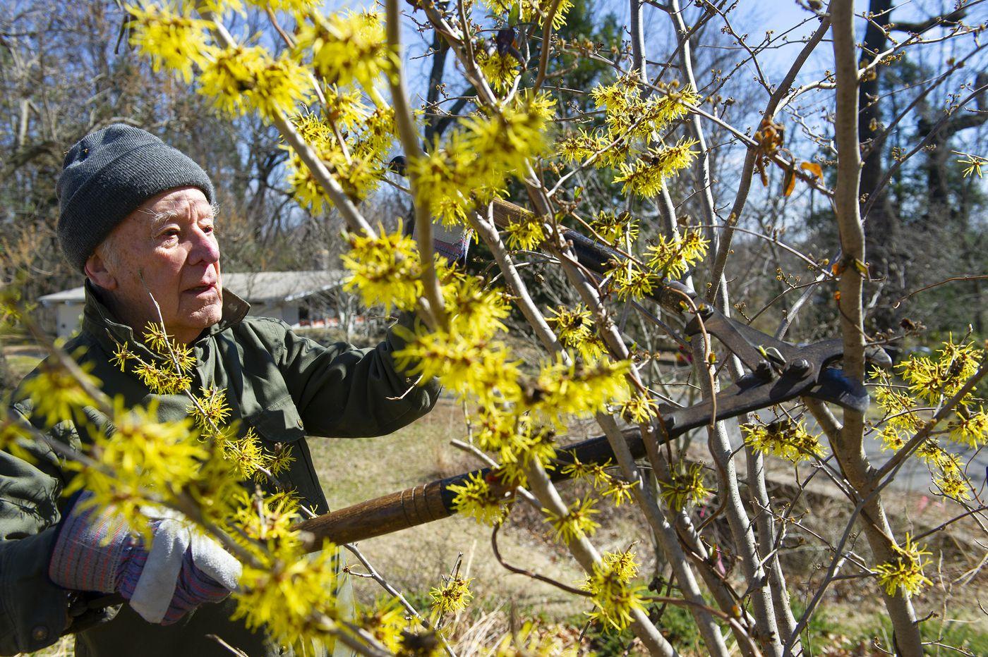 Cherry Hill church's arboretum is a 'secret garden' no more