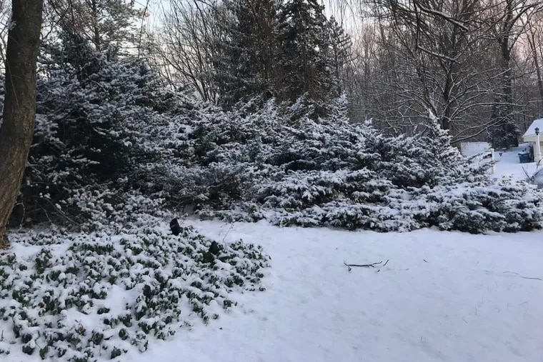 Another decorative snow fell overnight.