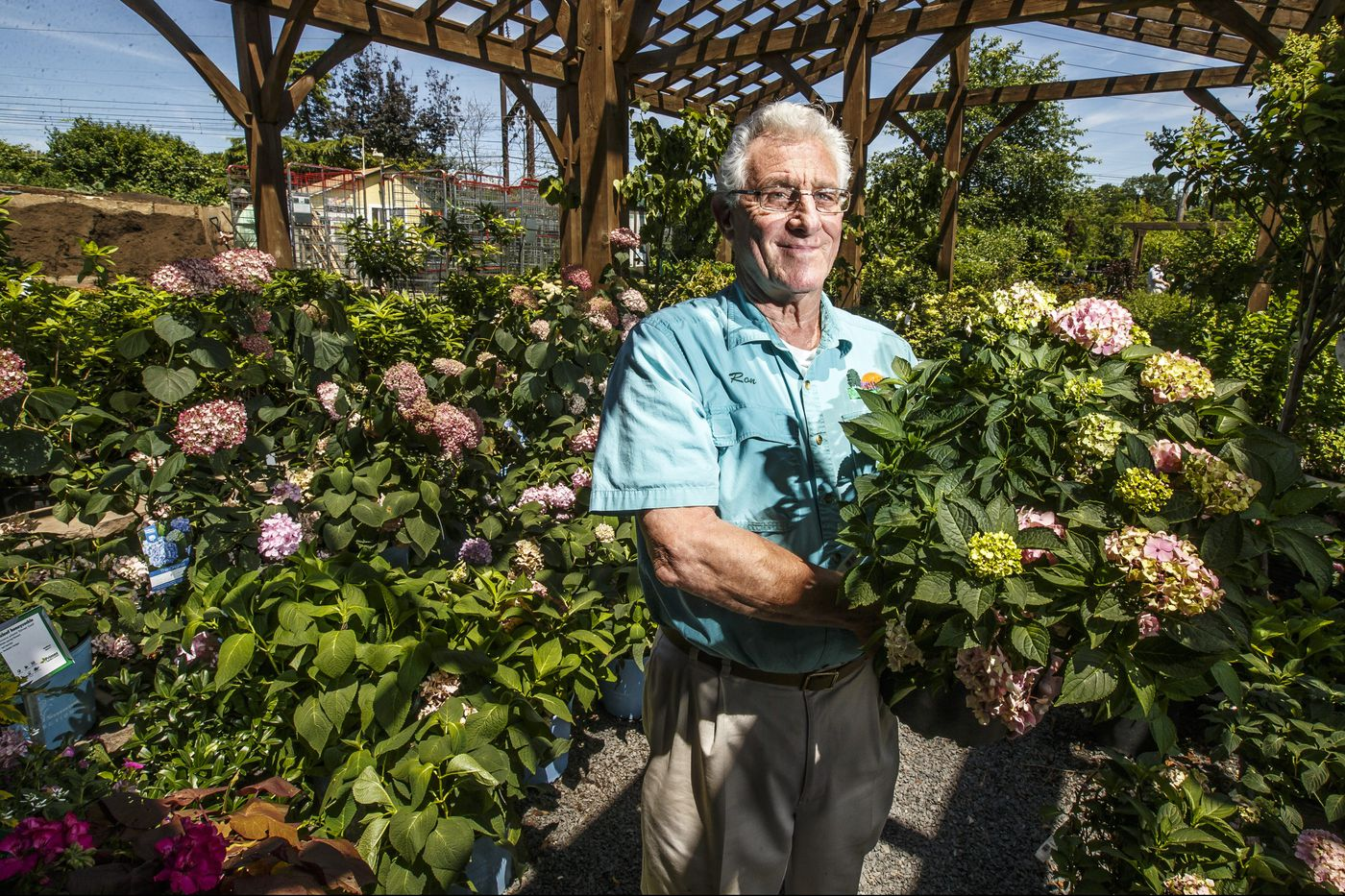 What makes hydrangeas blue or pink? Playing defense