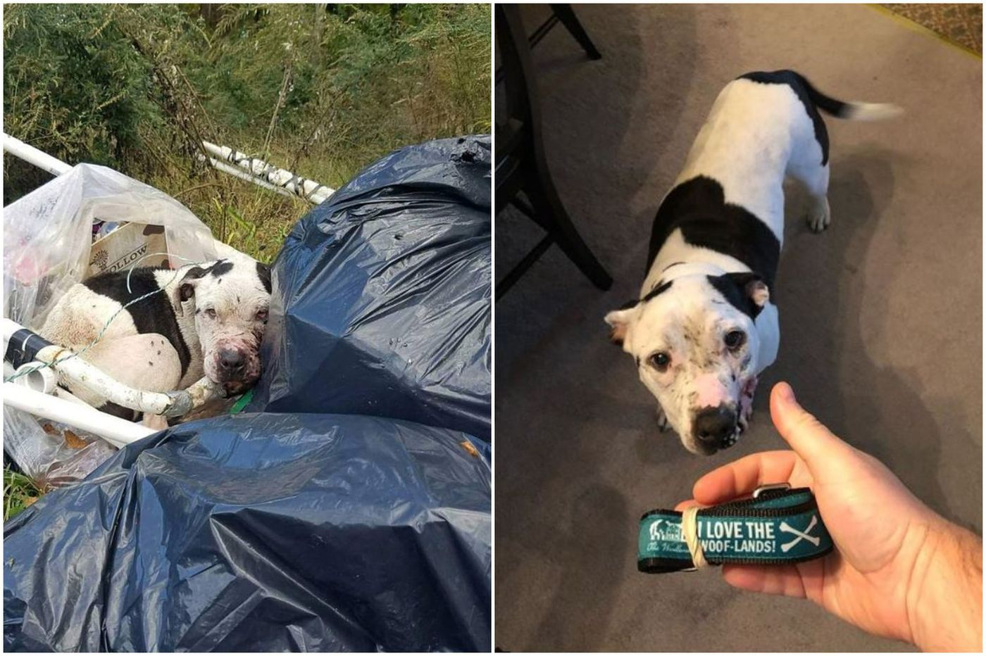 Found chained to a West Philly dumpster, this underdog is now having his day