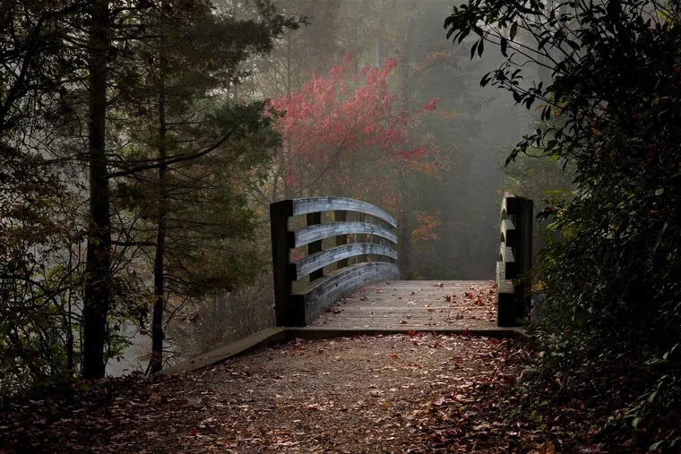 The Pinelands Preservation Alliance announced the winners Nov. 3, 2018 of its second annual juried photo competition. This is the overall 1st place winner by Dennis Abriola.