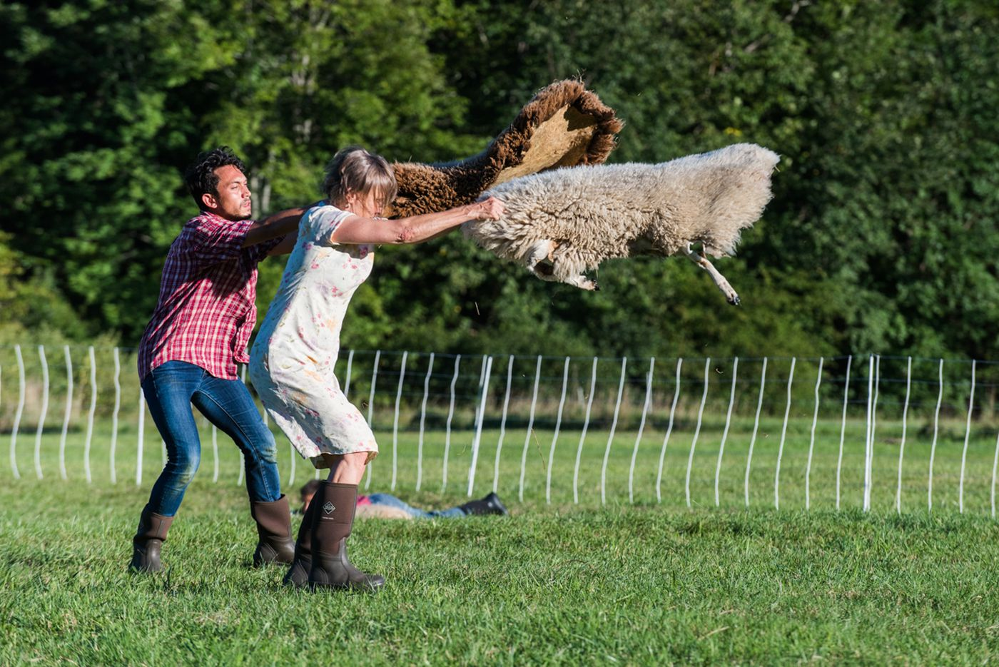 'Doggie Hamlet': A baaa-llet where sheep are the stars