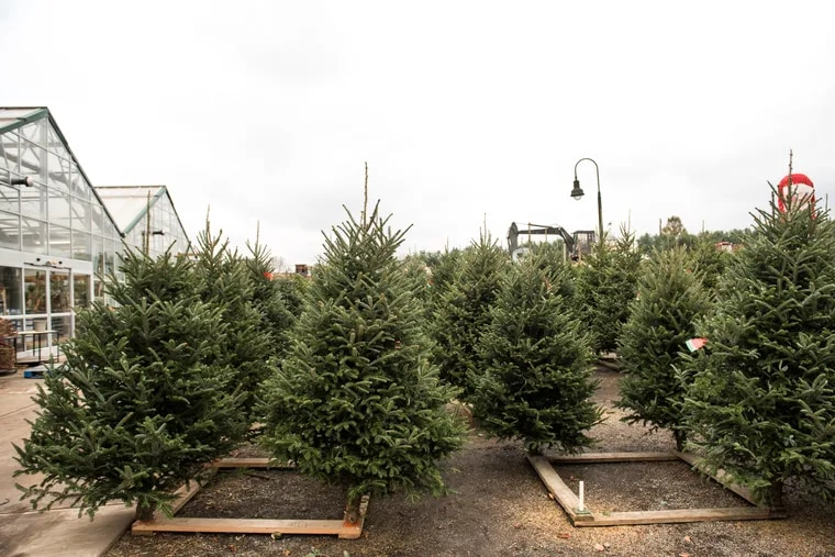 Whether a Douglas, Canaan, or Fraser fir, lush evergreens await at farms and Christmas tree stands all across the region. Head out and select your favorite to become a holiday household centerpiece through to the New Year.