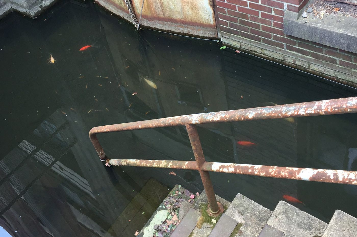 Cellar-dwelling fish are a mystery in South Philadelphia's Navy Yard