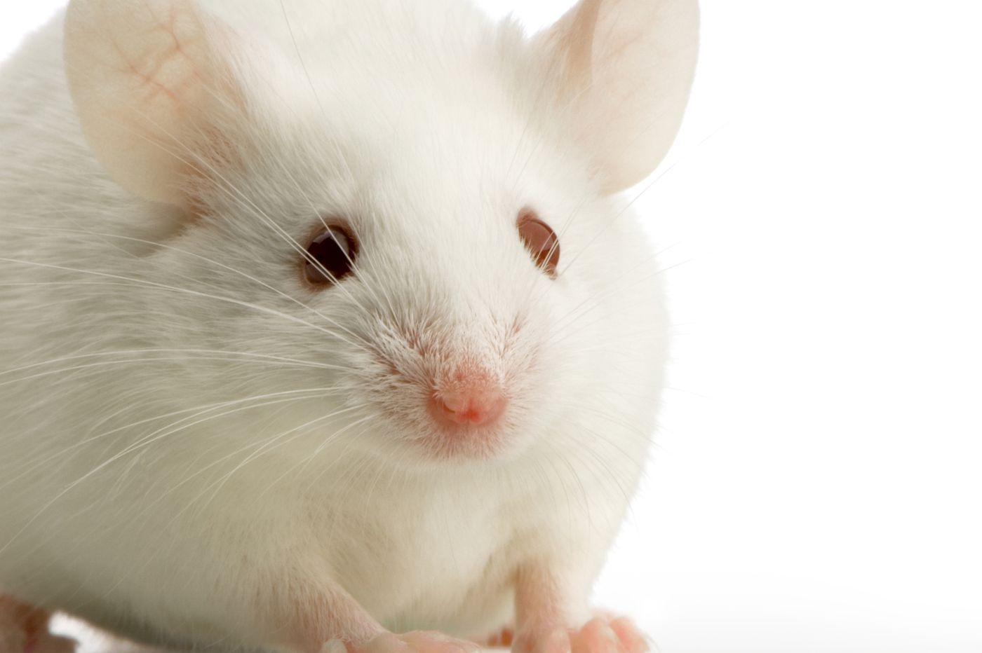 Mice that vaped nicotine for a year had big increase in tumor growth