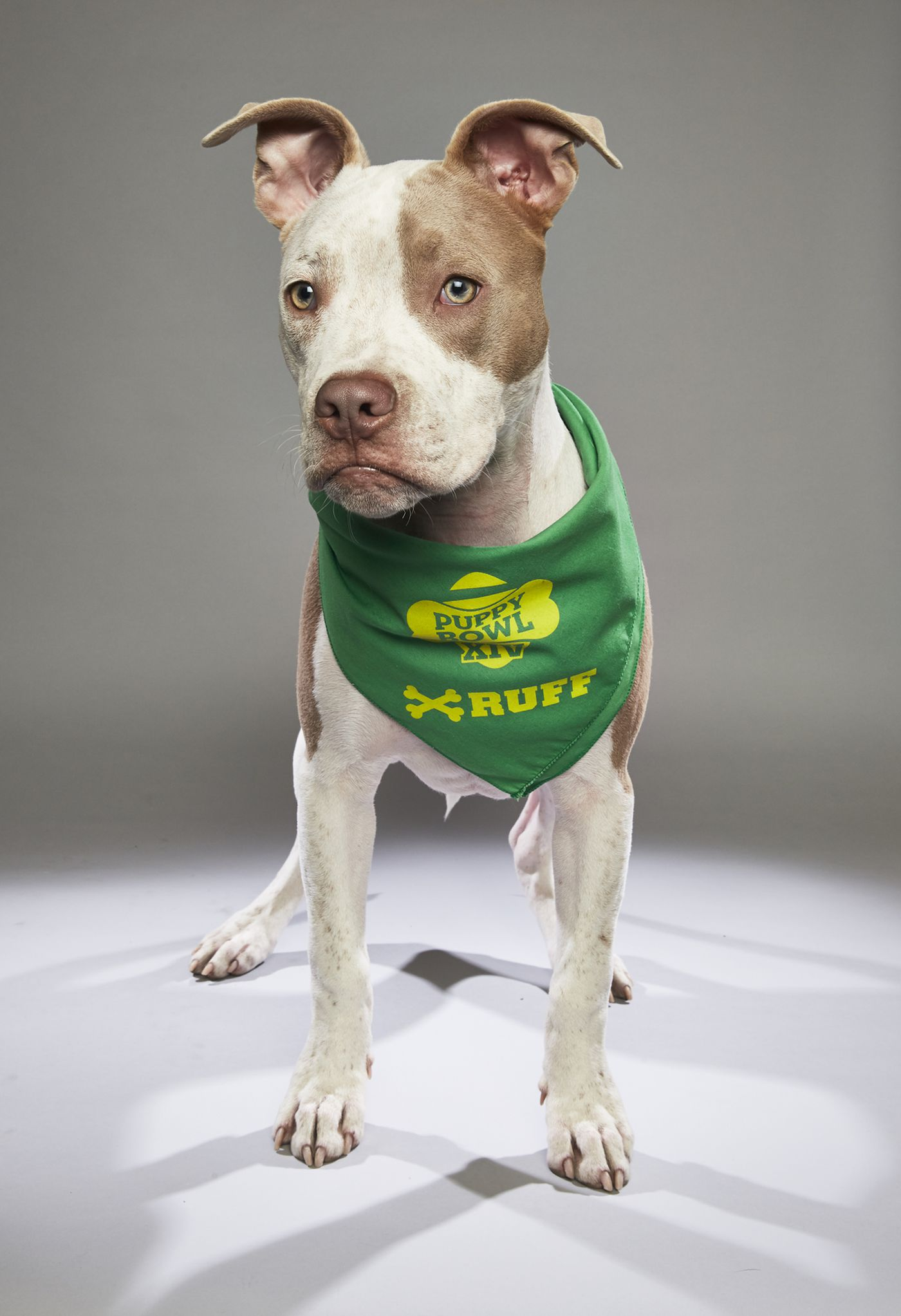 hot sales a7054 c9731 Animal Planet's Puppy Bowl XIV to feature four Philly dogs